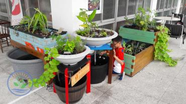 Aquaponic Systems